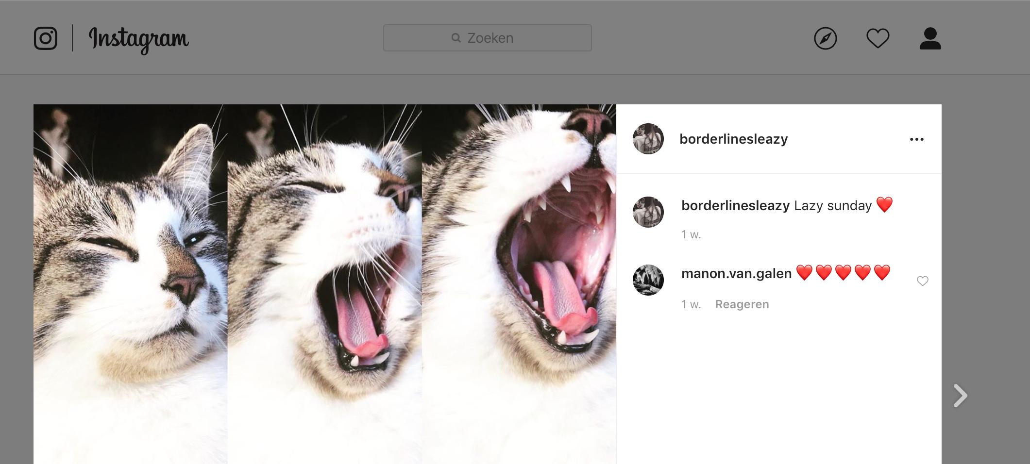 Instagram foto's delen op WordPress