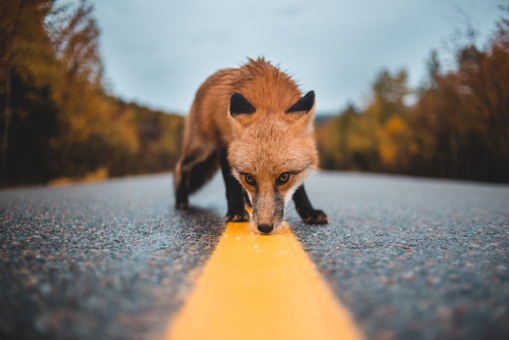 Orbit Fox plugin